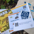 Buglife Membership Pack